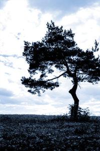 Rudyard Kipling poem tree
